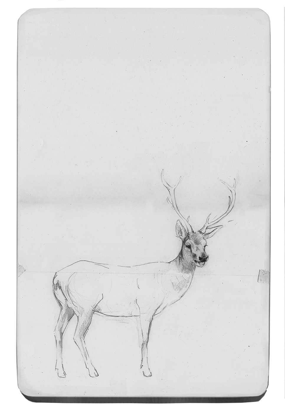 graphite on mounted paper. 2010
